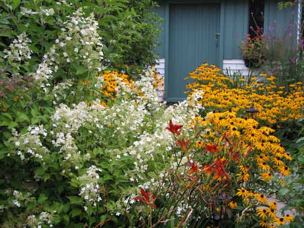 Dans mon jardin, Hydrangea, hémorocaille et rudbeckia