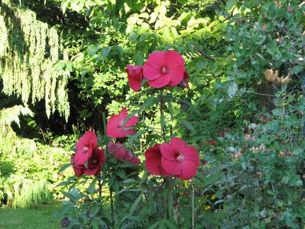 Luce lamoureux inspiration - Campe dans mon jardin ...